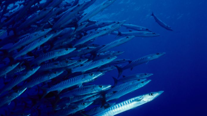 Aquamonitrix nitrite and nitrate monitoring in aquaculture